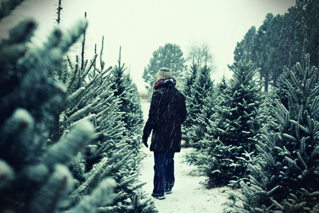looking for a xmas tree