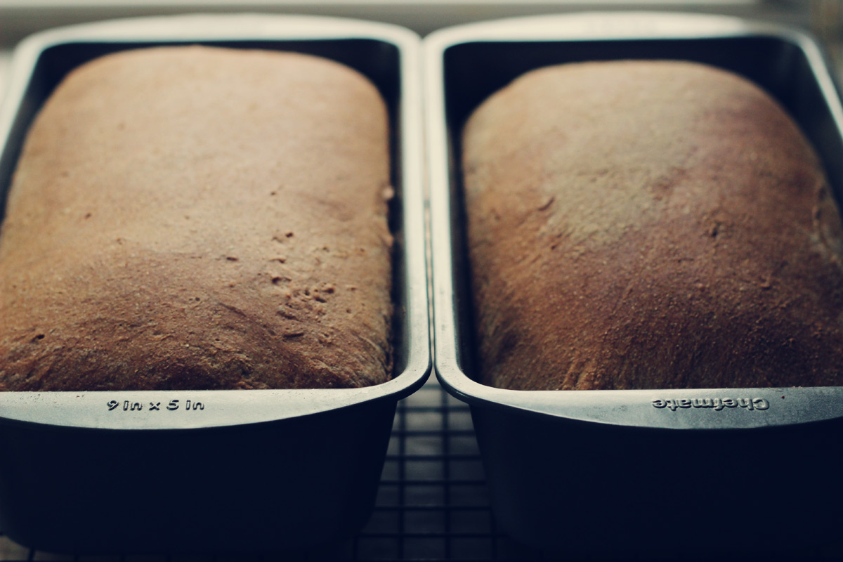 Whole Wheat Sandwich Bread: Attempt #2