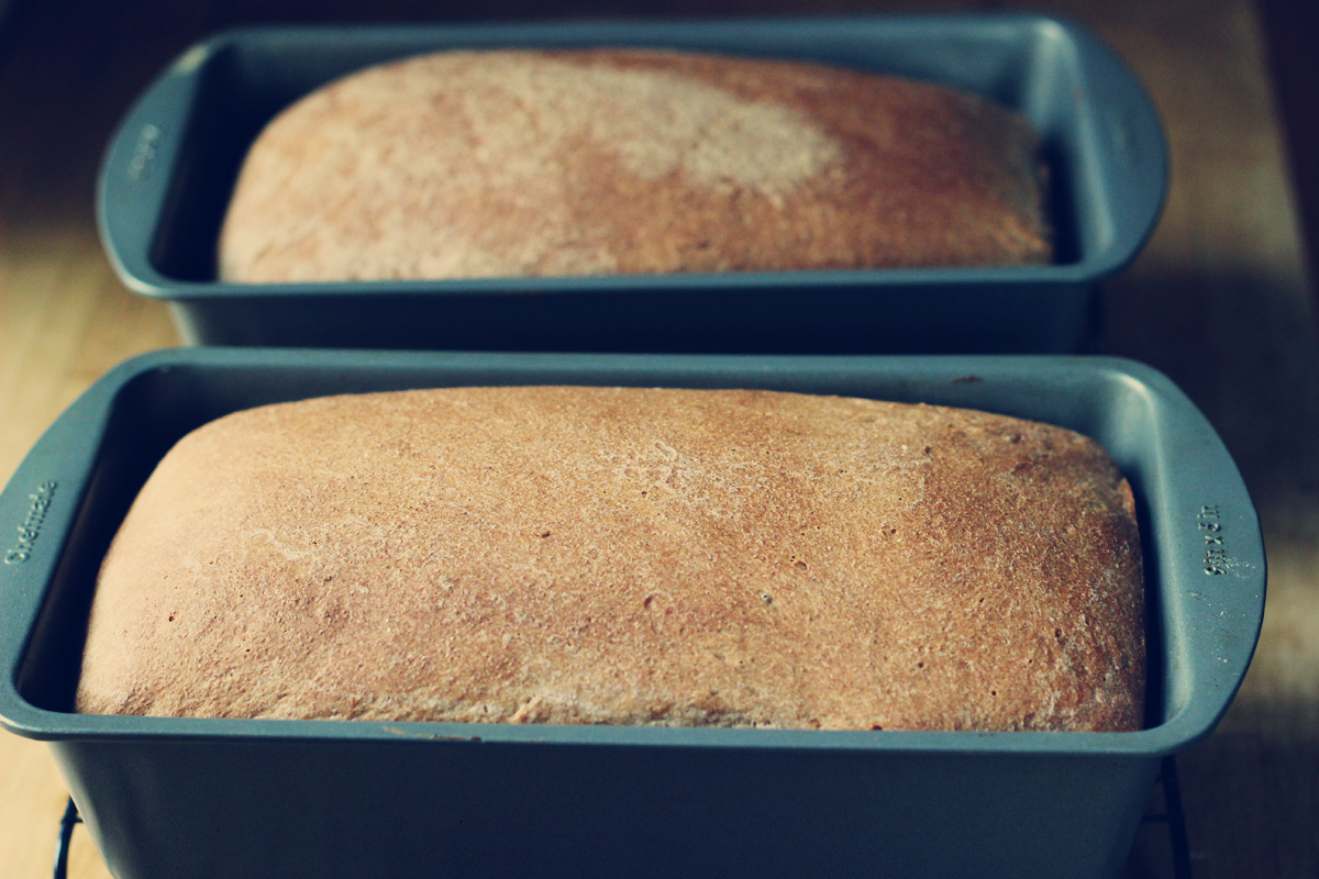 whole-wheat-sandwich-bread
