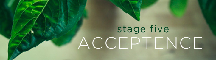 stage-five-acceptence