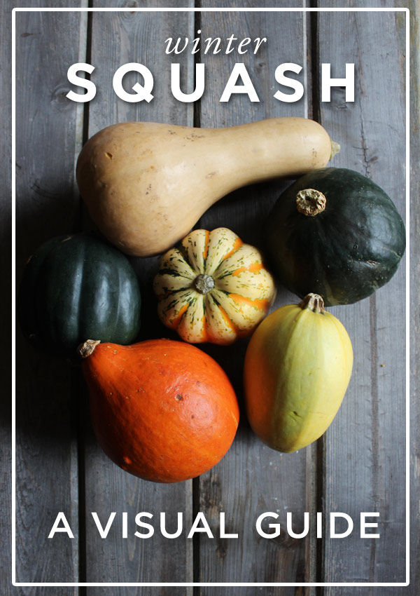 winter-squash-a-visual-guide
